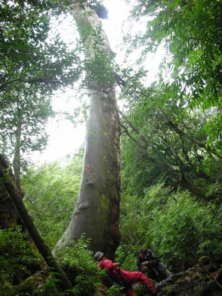 long tree