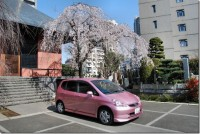 car-cherry-tree