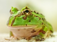 froggie10