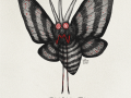 049-venomoth