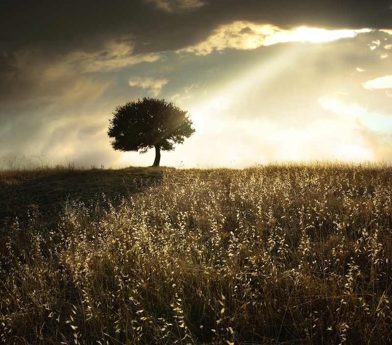 flourishing-life